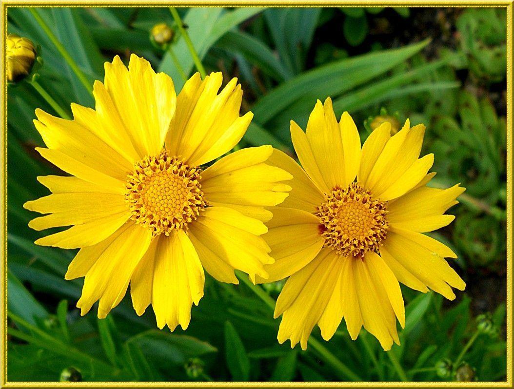 Plantes et fleurs - Noms de fleurs et plantes ...